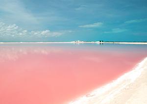 『テレビで紹介されたピンクの湖!』ピンクレイク&RIO LAGARTOS ジャングルツアー