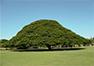 【ホノルル発】オアフ島ぐるっと1周観光<スタンダード>