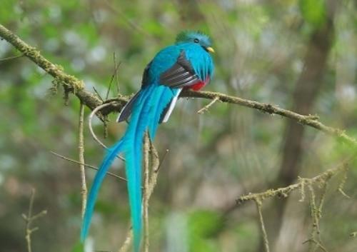 H.I.S.】【サンホセ発着】世界一美しい鳥!ケツァール探鳥ツアー